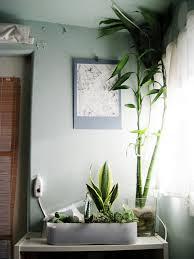 grünpflanzen im schlafzimmer schlafzimmer fabelhaft grünpflanzen im schlafzimmer gestaltung