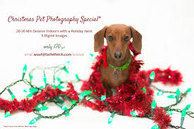 pet christmas farfel fetch pet photography christmas pet photos