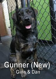 australian shepherd x rottweiler fort fido dog daycare u0026 boarding news blog
