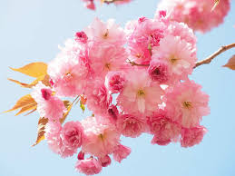 Japanese Flowers Pictures - say it with a japanese flower yabai the modern vibrant face