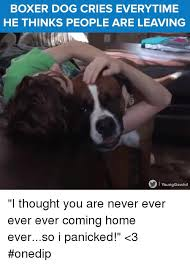 boxer dog uncontrollable head shaking 25 best memes about boxer dogs boxer dogs memes