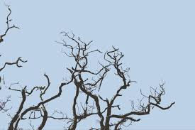 free stock photo 3007 gnarled tree branches freeimageslive