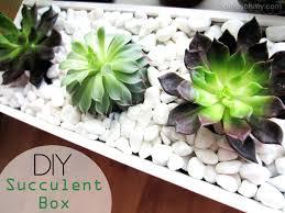 planters diy succulent pot container planter box concrete