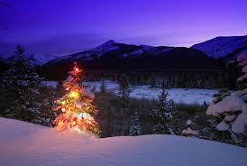 outdoor christmas tree awesome outdoor christmas tree lighting ideas