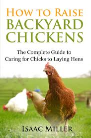 cheap best laying chickens find best laying chickens deals on