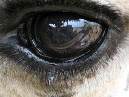 ნაღვლიანი თვალები