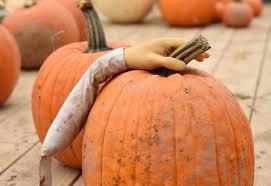 a passel of pumpkins for halloween u2013 twin cities