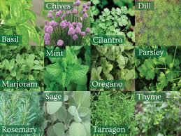 Different Garden Ideas 5 Ideas To Make Your Herb Garden Grow Runyon Equipment Rental