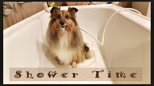showertime bath epienso com