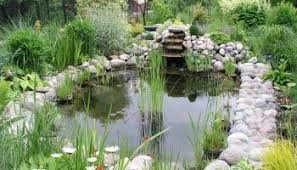 Backyard Ponds For Dummies How To Build A Pond A Beginners Guide To Building The Perfect