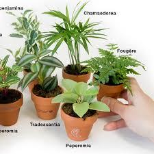 plante d駱olluante chambre santé les plantes dépolluent et purifient votre intérieur