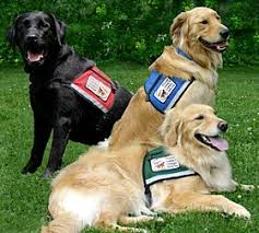 Dogs Helping Blind People Your Service Dogs Not Only Great Pets But Helping The Community