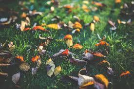 best black friday deals in connecticut connecticut garden journal shiitake mushrooms wnpr news