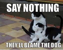 Hysterical Memes - 30 powerfully true and hysterical cat memes purrtacular