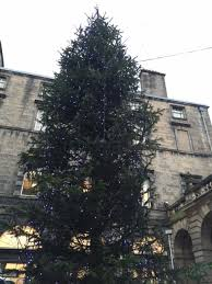 where to get your real tree this year in edinburgh the