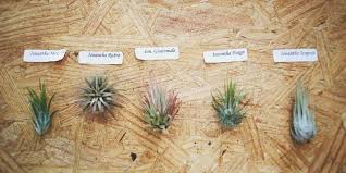 Air Plants How To Care For Air Plants Huffpost
