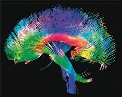 brain wiring diagram dolgular