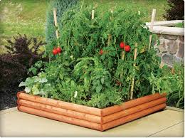 good looking small small vegetable garden with bamboo garden bed