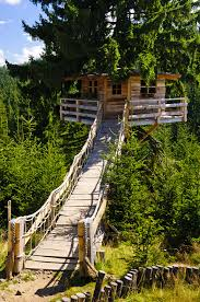 images about treehouse ideas on pinterest tree houses and