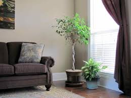 Indoor Gardening by Modern Modern Tall Indoor Plants Style Houseplant Google Search