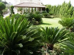 Types Of Garden Trees Different Types Of Gymnosperm Plants Wearefound Home Design
