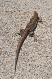 34 best amazing reptiles images on pinterest lizards reptiles