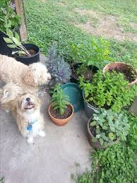 Box Garden Layout 25 Best Diy Edible Garden Images On Pinterest Vegetable Garden