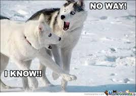 Husky Meme - husky by peachybum meme center