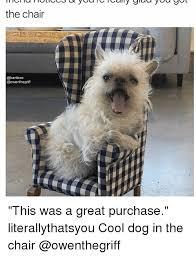 Cool Dog Meme - 25 best memes about cool dog cool dog memes