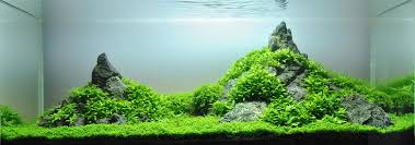 Aquascape Takashi Amano A Guide To Aquascaping The Planted Aquarium