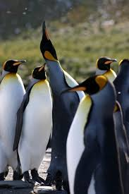 Georgia wildlife tours images Holidays to south georgia south sandwich islands explore jpg