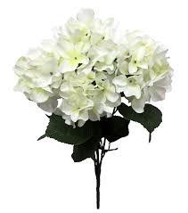 white hydrangea white hydrangea bush by blooming joann