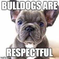 French Bulldog Meme - french bulldog memes imgflip