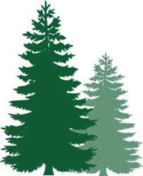 pine trees clip at clker vector clip royalty
