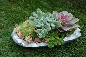 trendy small space rock garden ideas to salient landscaping small