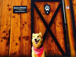 Dog Patio 16 Dog Friendly Bars And Restaurants In Portland Mapped