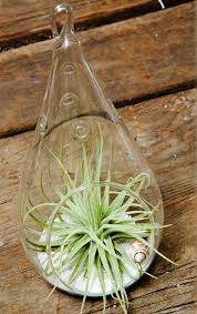 6 common terrarium care mistakes to avoid giving plants blog