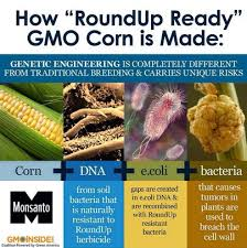 What Are Gmos Eat Food Not Phood