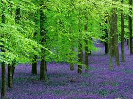 image result for http www tree pictures beautiful