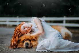 dog euthanasia top 5 reasons in home pet euthanasia is better tranquility