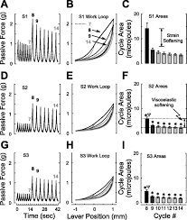 rok induced cross link formation stiffens passive muscle