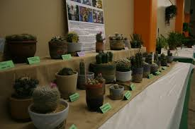 mn native plant society minnesota state fair potted plant show u2013 my northern garden