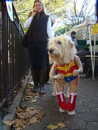 do this now to keep your dog safe and happy in a dog halloween