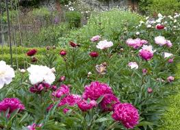 flowers garden spring flowers beauty colors lovely beautiful path