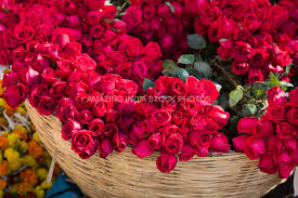 Roses For Sale Exotic Flowers Foliage In Royalty Free Stock Images Amazing