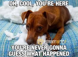 Oh You Dog Meme - funny dog memes