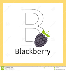 blackberry and letter b coloring page stock vector image 85342671