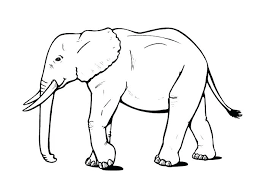 coloring pages elephant and piggie elephant and piggie coloring pages elephant and coloring page