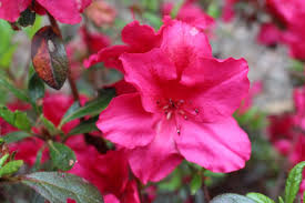 Fragrant Plants For Shade - great plants for shade gardens hgtv