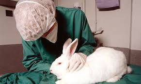 Seeking De Que Trata Questions And Answers About Animal Experimentation Openmind